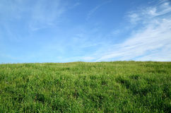 Land horizon. Green field and blue sky Stock Photography