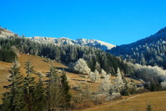 Land im Winter Lizenzfreies Stockbild