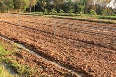 Land, innan att plantera i lantgård Royaltyfri Fotografi