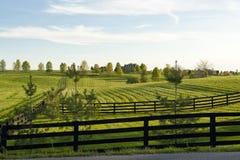 Land-Landschaft Lizenzfreie Stockbilder