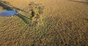 Land landwirtschaftlich und Landwirtschaftsfeld stock video