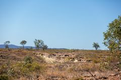 Land Made Barren By Removing Trees. Land devastated by tree clearing for cattle grazing stock photo