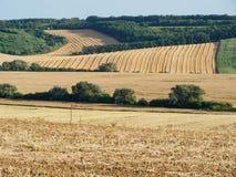 Land met de lijnen van het gebied tijdens de oogst Royalty-vrije Stock Foto