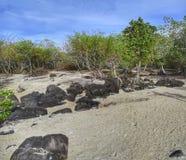 Land met wit zand met weinig bomen rond en sommige rotsen wordt behandeld die Stock Afbeeldingen