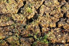 Land mit trockenem gebrochenem Boden stockfotografie