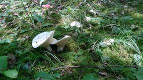 Land of Mushrooms royalty free stock photos