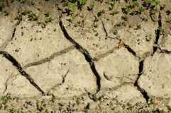 Land parched land Stock Images