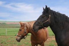 Land-Pferde Lizenzfreie Stockfotografie