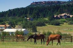 Land-Pferde auf einer Ranch in Kolorado Stockbilder