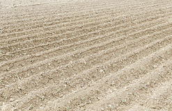 Land plowed for planting Stock Photography