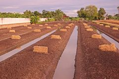 Land preparation for vegetable planting in low land Stock Photos