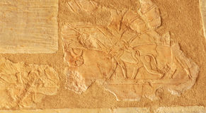 Land of Punt. Ancient egyptian bas-relief scene from the expedition to the land of Punt with mother baboon, and baby on back, and rhinocerous Royalty Free Stock Photos
