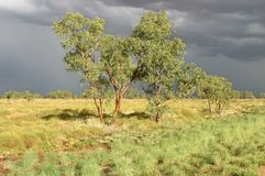 Land before rain. Feature land with few trees on a meadow and dark gray clouds over the sky. Kimberley, Western Australia, Australia Stock Images