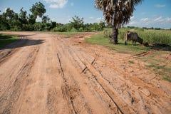 Land road03 med tvärgatan, kon och kalven royaltyfri bild