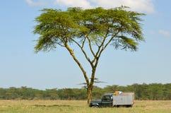 Land rover sul safari Fotografie Stock