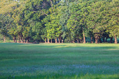 Land scape of green park and grass field Royalty Free Stock Image