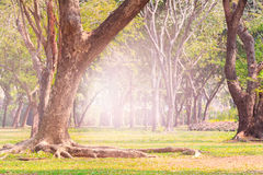 Land scpae of green tree in public park with flare light backgro Royalty Free Stock Images