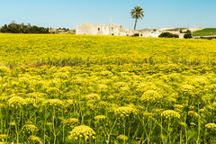 Land of Sicily Royalty Free Stock Photography