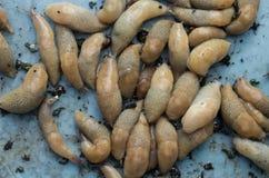 Land slugs. Group snapshot. Land slugs on a pale blue background. Group snapshot. Agricultural pest Royalty Free Stock Photography