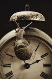 Land snail and alarm clock Royalty Free Stock Photo