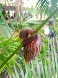 Land snail climbling stock images