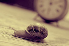 Land snail and clock, in sepia tone Royalty Free Stock Image