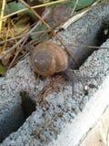 Land snail Stock Photo
