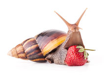 Land snail Stock Photos