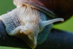 Land snail close macro take royalty free stock images