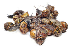 Land snails Stock Images
