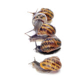 Land snails Stock Photo