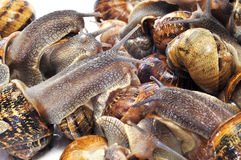 Land snails Stock Photos