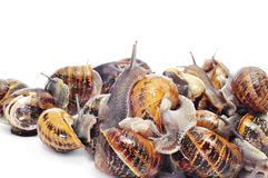 Land snails Royalty Free Stock Photography