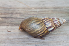 Land snails while hiding in shell Stock Photography