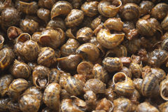 Land snails in sauce, gastronomy Royalty Free Stock Images