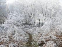 Land in sneeuw wordt behandeld die stock fotografie