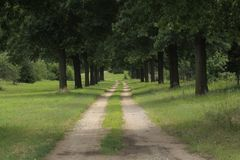 Land-Straße, die zwischen Baumreihen geht stockbild