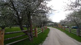 Land-Straße durch Apple-Blüten stockfotografie
