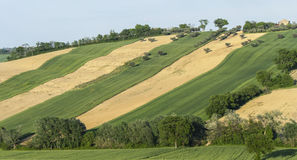 Land stripes. Hilly land stripes in gentle slope with strips of land covered with vegetation that looks like velvet and strips of land not cultivated with some Stock Images