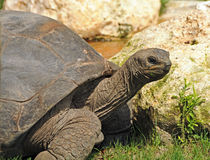 Land tortoise Stock Photos