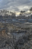 Land with trees after fire Royalty Free Stock Image