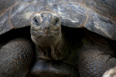 Land turtle Stock Images