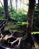 Land van hobbits Stock Foto