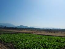 Land van landbouw royalty-vrije stock afbeeldingen
