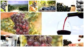 Land van wijncollage stock videobeelden