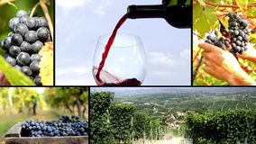 Land van wijnmontering stock video