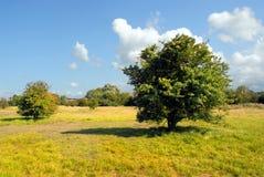 Land von Normandie Lizenzfreies Stockfoto