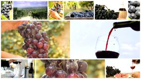 Land of wine collage. Red wine montage including grapes, close ups of people in vineyards and pouring wine stock video footage