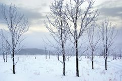 The land in winter Royalty Free Stock Image