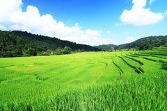 Landa för fält Arkivfoto